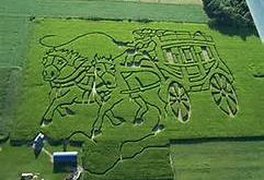 Coolspring Corn Maze