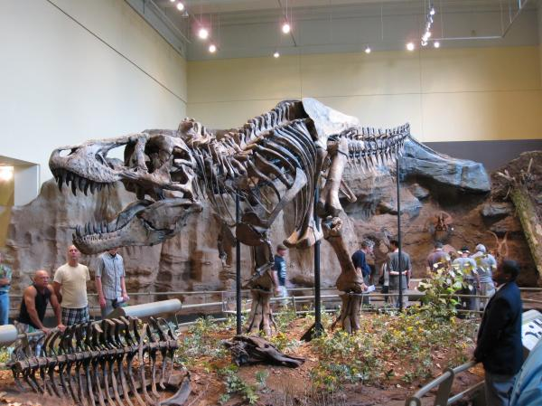 Tyrannosaurus Rex is always a hit at the Carnegie Museum of Natural History.